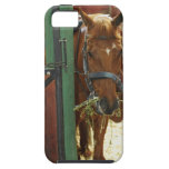 Horse standing in a stable iPhone 5 covers