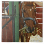 Horse standing in a stable large square tile