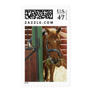Horse standing in a stable postage