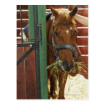 Horse standing in a stable postcard