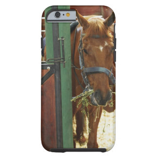 Horse standing in a stable tough iPhone 6 case
