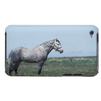 Horse standing in field iPod Case-Mate cases