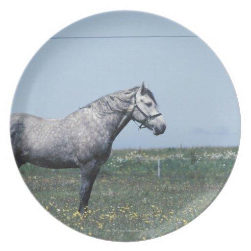 Horse standing in field melamine plate