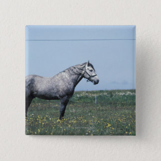 Horse standing in field pinback button