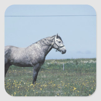 Horse standing in field square stickers