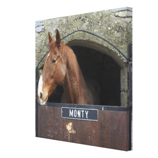 Horse standing looking out of its stable canvas print