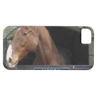 Horse standing looking out of its stable iPhone SE/5/5s case