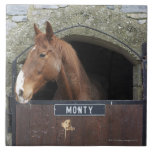 Horse standing looking out of its stable large square tile