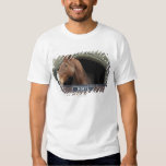 Horse standing looking out of its stable tee shirts