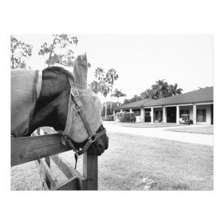 horse staring at barn bw custom flyer