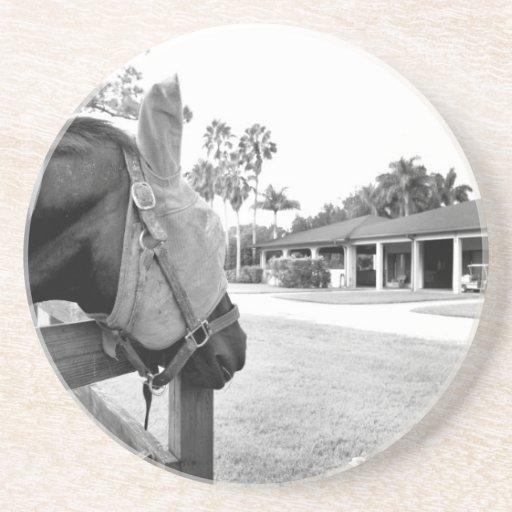 horse staring at barn bw drink coasters