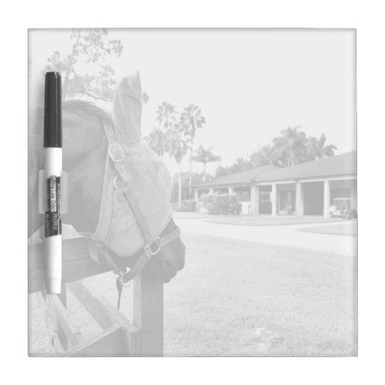 horse staring at barn bw Dry-Erase board