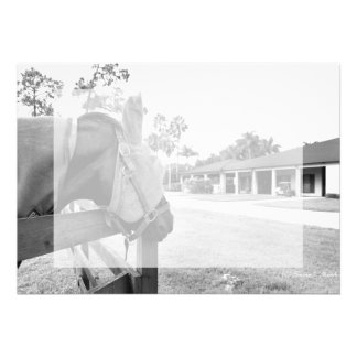 horse staring at barn bw custom invitation