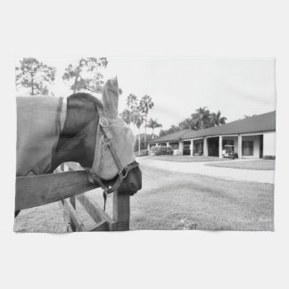 horse staring at barn bw kitchen towels