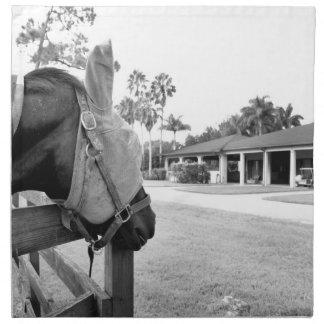 horse staring at barn bw napkin