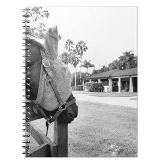 horse staring at barn bw notebook