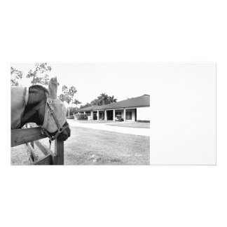 horse staring at barn bw photo cards