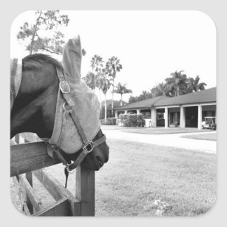 horse staring at barn bw square stickers