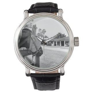 horse staring at barn bw wristwatches