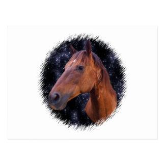 Horse stars postcard