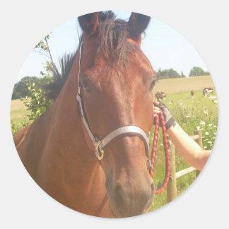Horse sticker - heste klistermærke