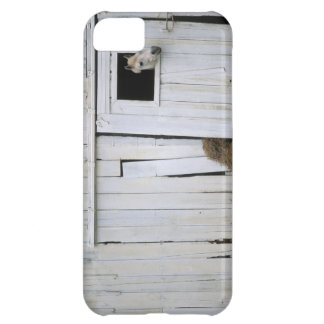 Horse Sticking Head out Barn Window Cover For iPhone 5C
