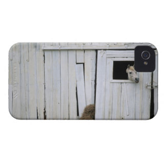Horse Sticking Head out Barn Window iPhone 4 Case-Mate Case