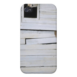 Horse Sticking Head out Barn Window iPhone 4 Covers