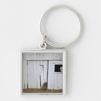 Horse Sticking Head out Barn Window Keychain