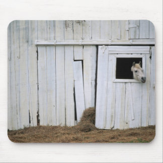 Horse Sticking Head out Barn Window Mouse Pad