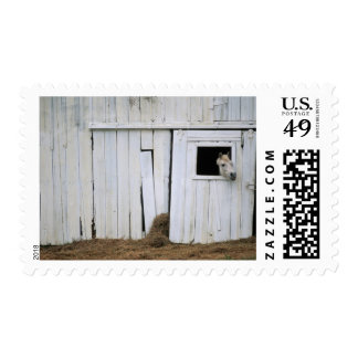 Horse Sticking Head out Barn Window Postage Stamp