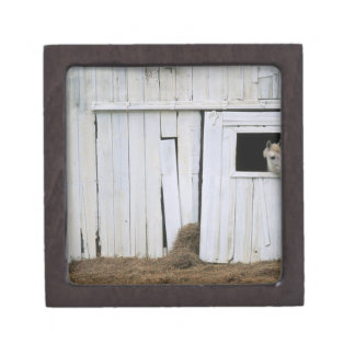 Horse Sticking Head out Barn Window Premium Keepsake Boxes
