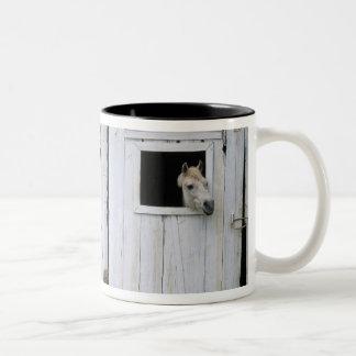 Horse Sticking Head out Barn Window Two-Tone Coffee Mug