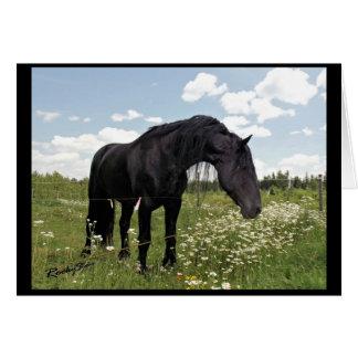 Horse Stretch Card