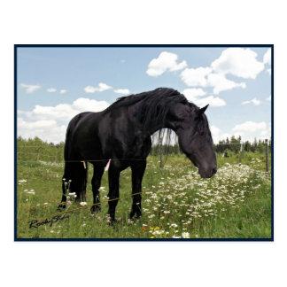 Horse Stretch Postcard
