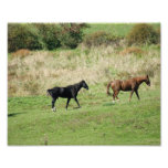 Horse Stroll 10x8 Photographic Print