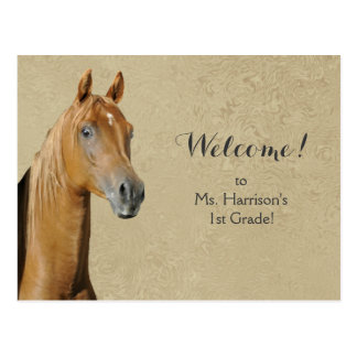 Horse Student Welcome From Teacher Postcard