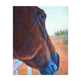 Horse Study in Brown Canvas Print