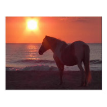 Horse Sunrise Postcard