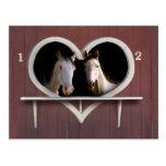 Horse Sweethearts Postcard