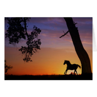 Horse sympathy card greeting cards