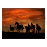 Horse Sympathy Card Greeting Cards