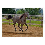 Horse Tennessee Walker Filly Yearling Gallop Card