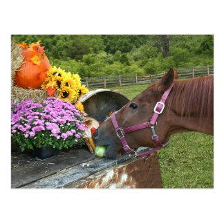Horse Thanksgiving Postcard