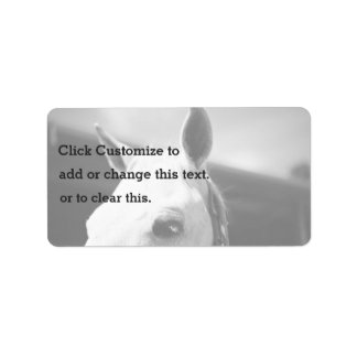 Horse Themed, Closeup Of White Horse With Perked E Address Label