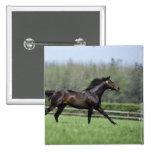 Horse Thoroughbreds, Wassl 1988, Button