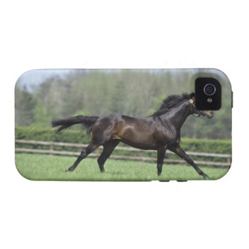 Horse Thoroughbreds, Wassl 1988, Case For The iPhone 4