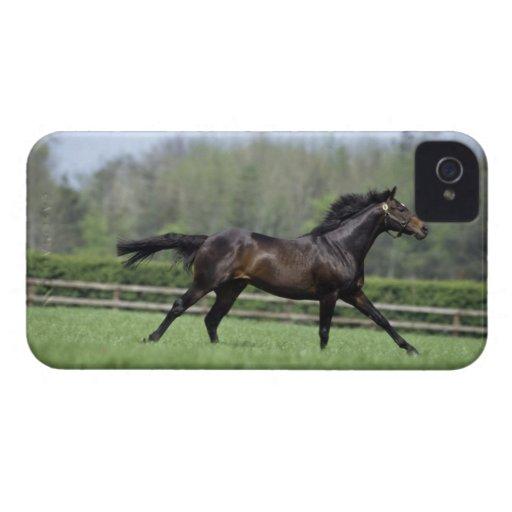Horse Thoroughbreds, Wassl 1988, Case-Mate iPhone 4 Cases
