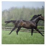 Horse Thoroughbreds, Wassl 1988, Ceramic Tile