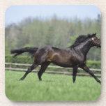 Horse Thoroughbreds, Wassl 1988, Drink Coaster